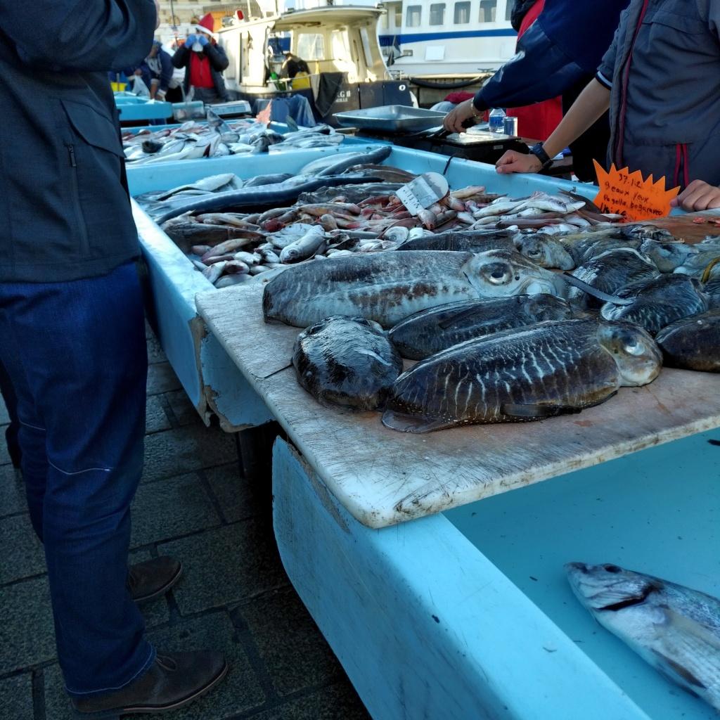 Seiches à l'étalage dans le Vieux-Port de Marseille. Pour certains pêcheurs, c'est la tenue de Noël qui s'ajoute à la lourde combinaison.