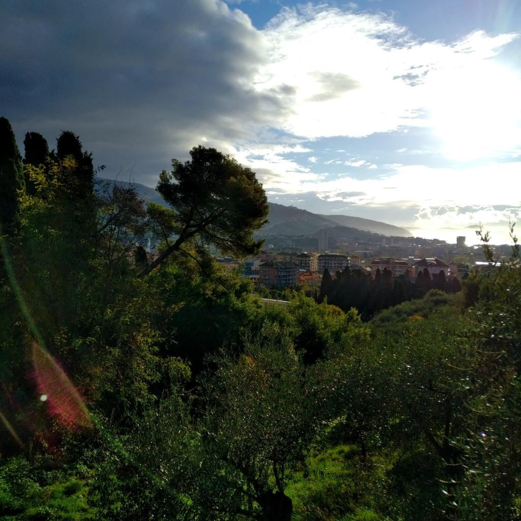 Vue sur une partie de Chiavari, prise non loin du cimetière monumental. Pins italiens (maritimes).
